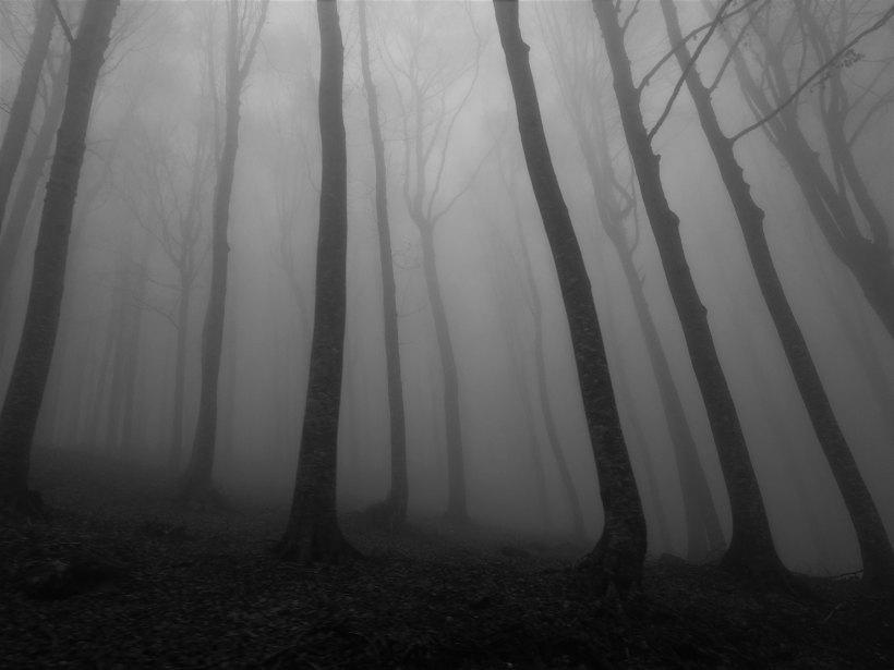 Photo of dark tall trees in a fog
