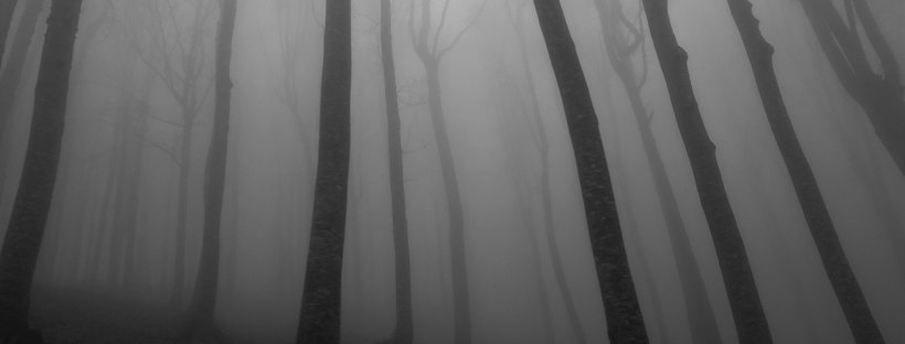 Photo of dark tall trees in a fog