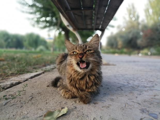 Photo of a brown mangy cat meowing and sitting under a park bench