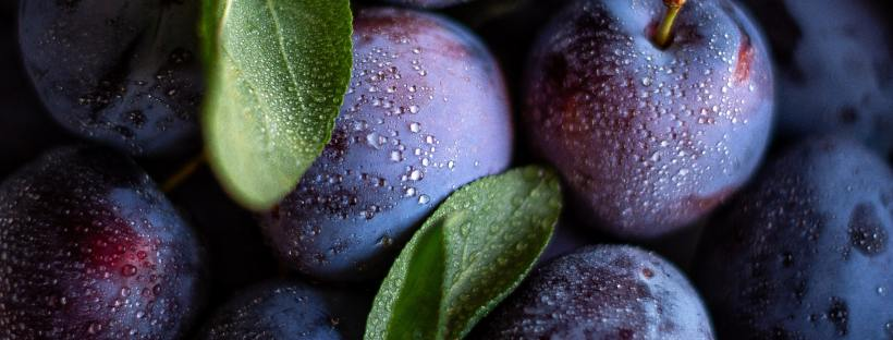 Close-up photo of purple plums and their green leaves