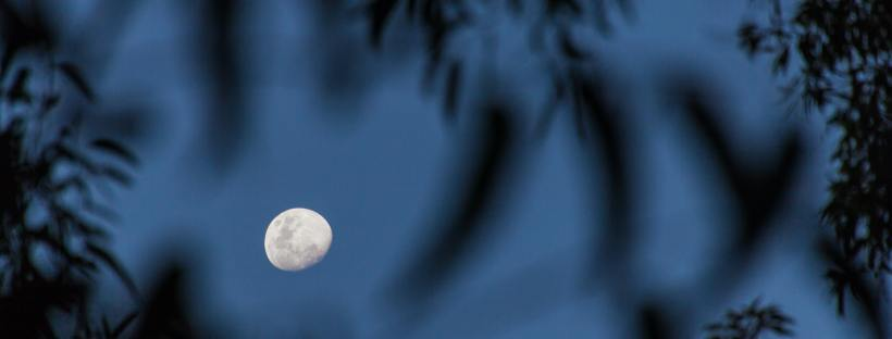 Photo of a moon in early evening dark blue sky, with tree leaves and branches in front of the camera, shading the view